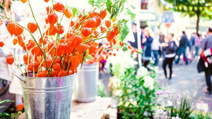 Wilbert zet graag de duurzame bloemetjes binnen